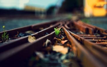 6954277-plant-railway-rails