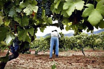 grapevine_wideweb__470x3130